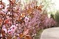 Flowers in Olympic GREEN - panoramio.jpg