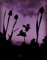 Flowers in Sunset.png