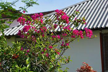 Flowers in morning.jpg