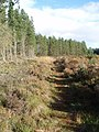 Footpath at the Knowetop Lochs Wildlife Reserve. - geograph.org.uk - 1009244.jpg