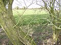Footpath to Eckensfield - geograph.org.uk - 354078.jpg