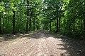 Forêt domaniale de Bois-d'Arcy 20.jpg