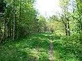 Forest - panoramio - ---=XEON=---.jpg