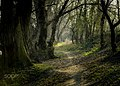 Forest Road (144938861).jpeg