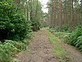 Forest track - geograph.org.uk - 229047.jpg