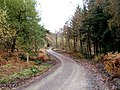 Forestry road in the Wyre Forest in Autumn - geograph.org.uk - 1577863.jpg