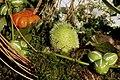 Fruits Exotiques CL J Weber (4) (23379662470).jpg