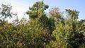 Garden Way - Wall - trees - streamlet - 17 Shahrivar st - Nishapur 24.JPG
