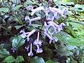 Gardenology.org-IMG 1306 rbgs10dec.jpg