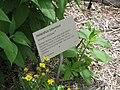Gardenology.org-IMG 2839 rbgs11jan.jpg