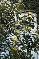 Garten Valentinhaus Mahonia 04.jpg