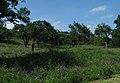 Gerbrunner Natur.jpg