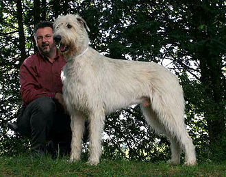Brian O'Rourke - Four Irish Wolfhounds were brought by O'Rourke as a gift for the Scottish monarch.