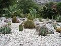 Gibraltar Botanic Gardens, cacti bed.jpg
