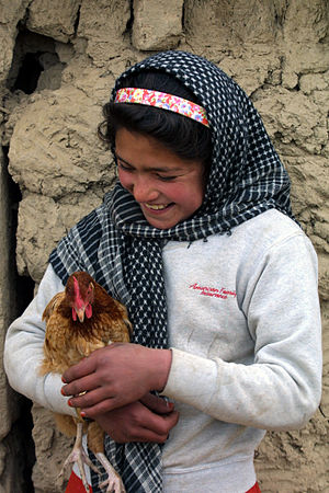 Girl with chicken, Afghanistan. Original title...