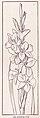 Gladiolus page 1175.jpg