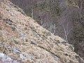 Goat, Glen Ure - geograph.org.uk - 741972.jpg