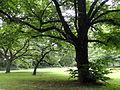 Grüneburgpark, Frankfurt - DSC01579.JPG