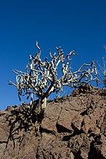 Gran Canaria Barranco de Mogán (MGK17480).jpg