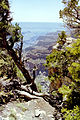 Grand Canyon North Rim05.jpg