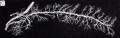 Grant 1962 157c.png
