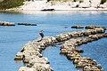 Great blue heron (34600707672).jpg