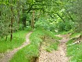 Grunewald - Sandiger Waldweg (Sandy Woodland Path) - geo.hlipp.de - 37204.jpg