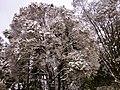 Guaçatonga encoberto de neve.jpg