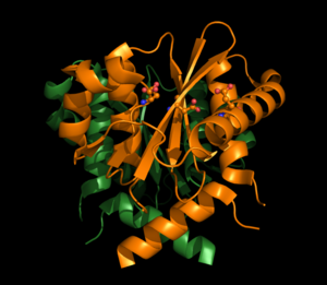 Integrase - HIV Integrase shown in its full structure with its catalytic amino acids shown in ball and stick form.