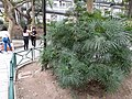 HK 中環 Central 遮打花園 Chater Garden flora green leaves n trees March 2020 SS2 30.jpg