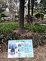 HK 中環 Central 遮打花園 Chater Garden flora green leaves n trees March 2020 SS2 60.jpg