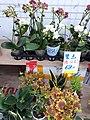 HK SYP 西環 Sai Ying Pun 皇后大道西 Queen's Road West shop 小盆栽 植物 planters December 2020 SS2 02.jpg