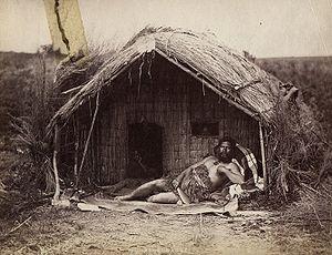 Typha orientalis - A traditional Māori whare (house)