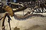 Hagryphus giganteus tail detail salt lake city.jpg