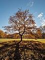 Hain Eiche Herbst 121696.jpg