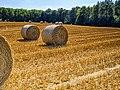 Harvest (29034594946).jpg