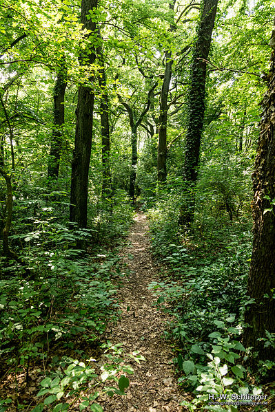 Les - prírodné spoločenstvo