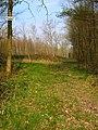 Hawkhurst Common Wood - geograph.org.uk - 383656.jpg