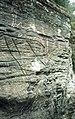 Helleristninger av reinsdyr på Steinmohaugen ved Hell i Stjørdal (1987) (12118758106).jpg