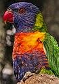 Hello pretty bird-1 (8246221980).jpg
