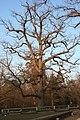 Herbst am Bärenschlössle.jpg