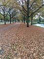 Herfst in Veendam 01.jpg