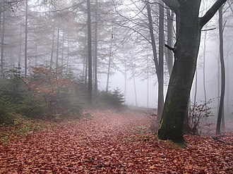 Battle of the Teutoburg Forest - The Teutoburg Forest on a foggy and rainy day