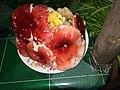 Het daeng het gohr Russula lepida เห็ดก่อ เห็ดแดง.jpg