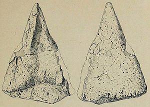 Hierosaurus - Spine
