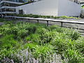 High Line, New York City (2014) - 06.JPG
