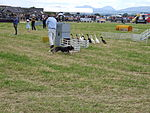 File:Highland games dog herding 2.JPG