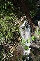 Hilton Falls-2012-05-19-012.jpg