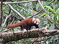 Himalayan Zoo, Darjeeling (7353945080).jpg