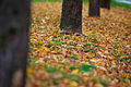 Hints of fall (2876948615).jpg